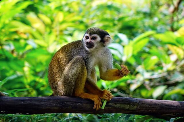 Животные Эквадора - фото, названия, описание