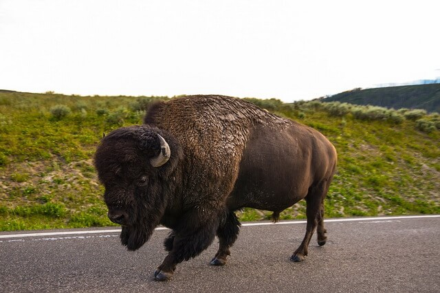 Животные-эндемики Северной Америки - ТОП-10 представителей североамериканской фауны