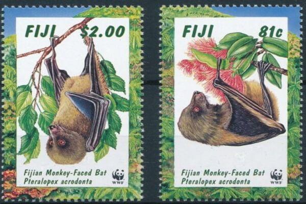 Животные Фиджи с фото и описанием - Летучая лисица Фиджи