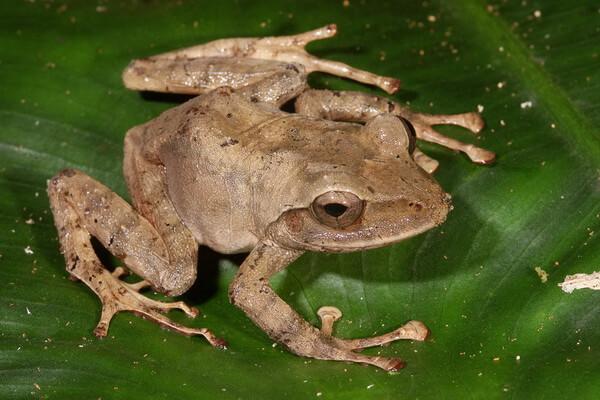 Животные Фиджи с фото и описанием - Фиджийская островница