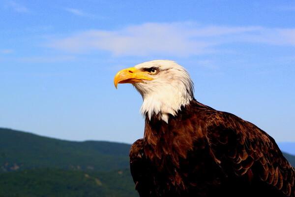 Животные и птицы Франции с фото и описанием