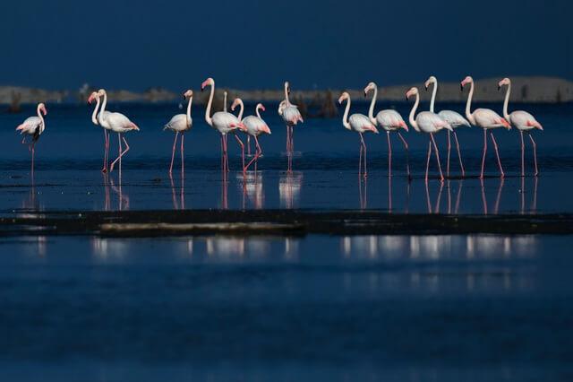 Животные и птицы Франции - фото, названия, описание