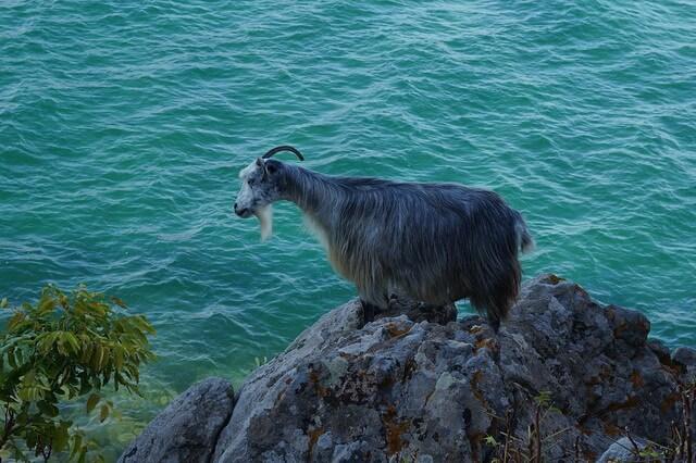 Животные Греции - фото, названия, описание основных видов греческой фауны