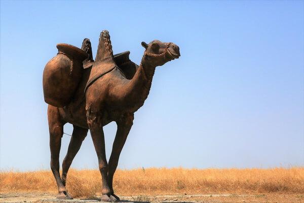 Животные Ирака с фото и описанием - Двугорбый верблюд (бактриан)