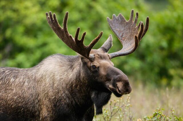 Животные Канады с фото и описанием