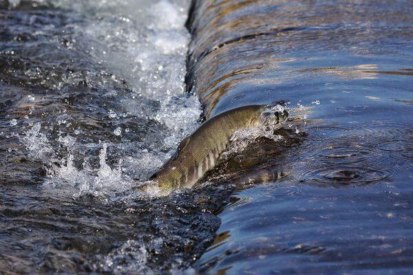 Рыба в Карелии - основные виды с названиями