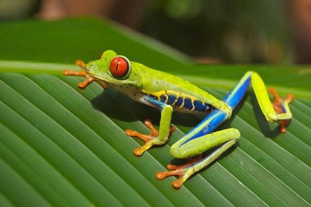 Животные и птицы Коста-Рика - фото, названия, описание фауны страны