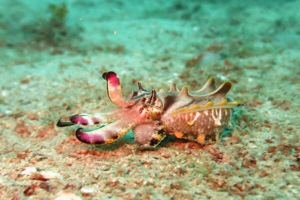 Животные, меняющие окрас - Каракатица