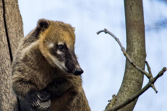 Животные Мексики - фото, названия, описание
