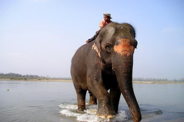 Животные Непала с фото и описанием - Азиатский слон