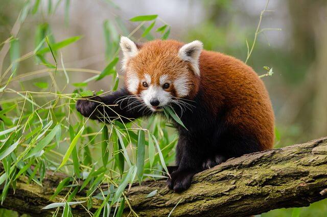 Животные Непала - уникальный животный мир страны с фото и описанием