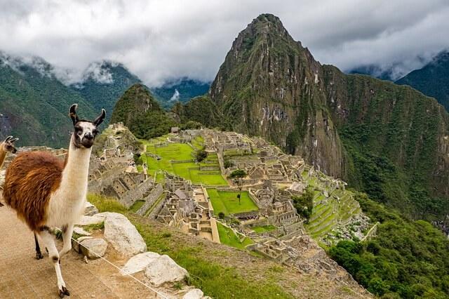 Животный мир Перу - основные животные и птицы страны