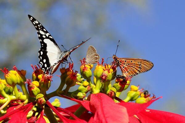 Животные Сербии с фото и описанием - Бабочки
