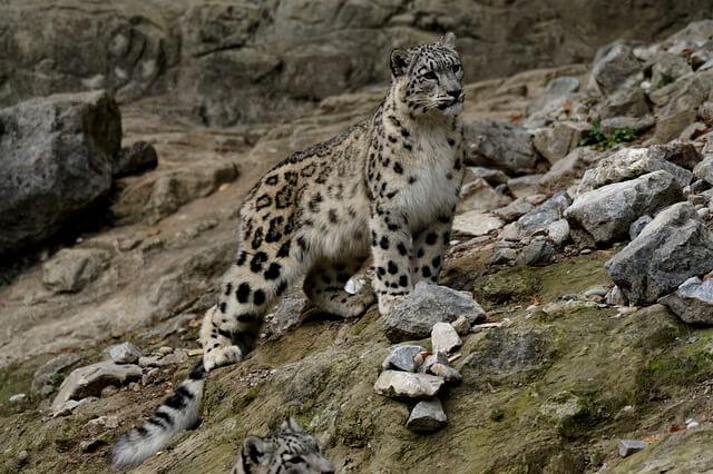 Животные Туркменистана - фото и описание основной фауны страны