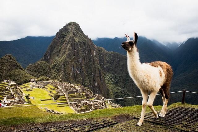 Животные Южной Америки - фото, названия, описание